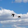 Geese In Flight by Linda Kerkau