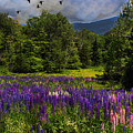Geese Over Lupine Field by Wayne King