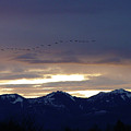 Geese Over The Cascades by Shirley Heyn