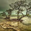 Geiger Key Shoreline by Mark Reinnoldt