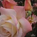 Gemini Rose by Marta Robin Gaughen