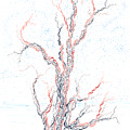 Genetic Branches by Regina Valluzzi