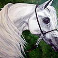 Gentle Arabian by BJ Redmond