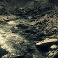 Gentle Creek Flow by Shelley Smith