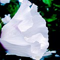 Gentle Floral by Debra Lynch