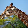 Gentle Giraffe by Donna Proctor