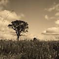 Gentle Landscape by Shari Jardina