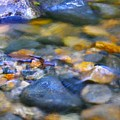 Gentle Ripples by Sharon Talson