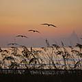 Gentle Sunrise by Adele Moscaritolo