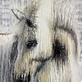 Gentle White Horse by Scott Lindner
