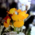 Gentle Yellow And White by Debra Lynch