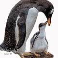 Gentoo Penguins by Larry Linton