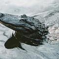 Genuine New O Alligator by Chris Colibaba