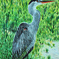 George - The Blue Heron by Tina Storey