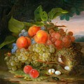 George Forster  Still Life With Fruit And A Birds Nest by George Forster