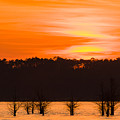George T. Bagby State Park Sunset by Stefan Mazzola
