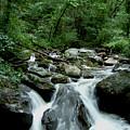 Georgia Mountian Stream by Mark Grayden