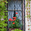 Red Flowers In Window Box by Jenny Setchell
