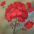 Geraniums by Filomena Irving