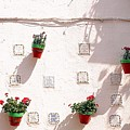 Geraniums Ganging Up by Jez C Self