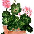 Geraniums In Clay Pots by Terri Mills