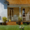 Geraniums On A Country Porch by Doug Strickland
