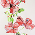 Geraniums by Sharon Cox