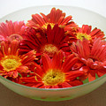 Gerbera Daisies - A Bowl Full by Lucyna A M Green