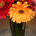 Gerbera Daisies - Vased by Lucyna A M Green