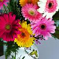 Gerbera Daisy Bouquet by Marilyn Hunt