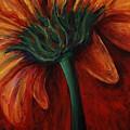 Gerbera Daisy by Nadine Rippelmeyer