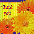 Gerbera Daisy Thank You Card by Mother Nature