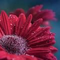 Gerbera Red Jewel by Sharon Mau