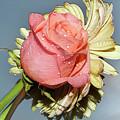 Gerbers With The Rose by Elvira Ladocki