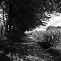 German Path Black And White by Edward Myers