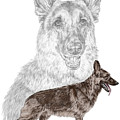 German Shepherd Art Print - Color Tinted by Kelli Swan
