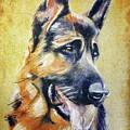 German Shepherd Dog Drawing by Daliana Pacuraru