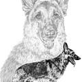 German Shepherd Dogs Print by Kelli Swan