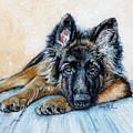 German Shepherd by Enzie Shahmiri