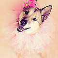 German Shepherd Mix Dog Dressed As Ballerina by R. Nelson
