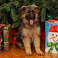 German Shepherd Puppy Card by Sandy Keeton