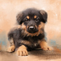 German Shepherd Puppy Portrait by Jai Johnson