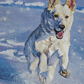 German Shepherd White In Snow by Lee Ann Shepard