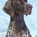 German Shorthaired Pointer 663 by Larry Matthews