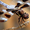 Get A Grip Dragonfly Close Up Art by Reid Callaway