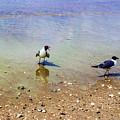 Get Lost Seagulls by Roberta Byram