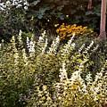 Lost In The Flower Garden by Kim Bemis