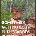 Getting Lost In The Woods by Bonny Puckett