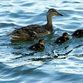 Getting Your Ducks In A Row by Debbie Karnes