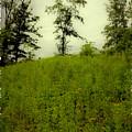 Gettysburg Landscape by Madeline Ellis